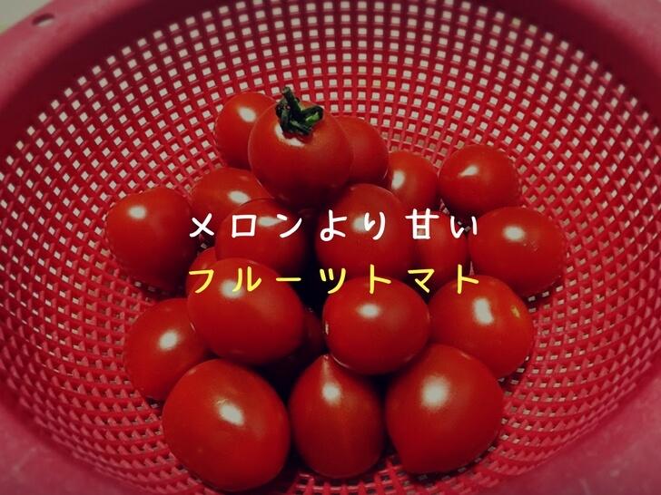 【フルーツトマト】メロン級に甘い!糖度&栄養素も高いトマトに感動