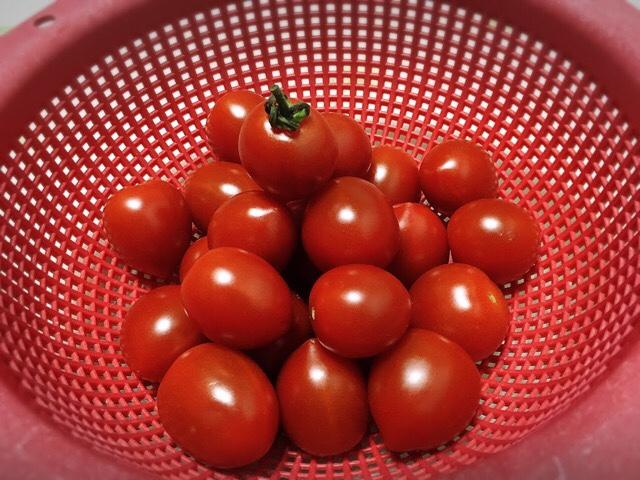 赤いボールに入ったフルーツトマト