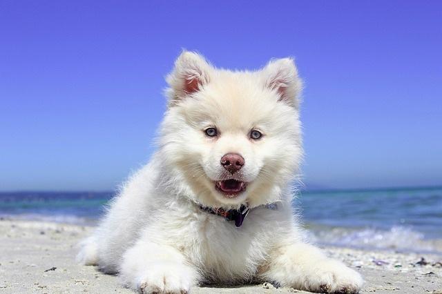 順光で撮られた写真(白い犬)