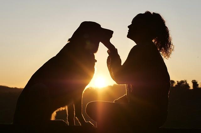 逆光で撮られた写真(犬と女性のシルエット)