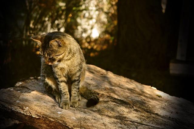 斜光で撮られた写真(猫)